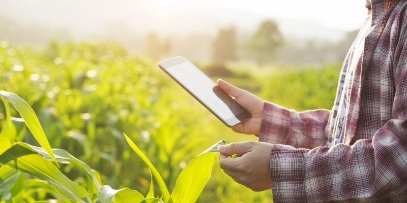 Machine Learning untuk memperkirakan pertumbuhan tanaman